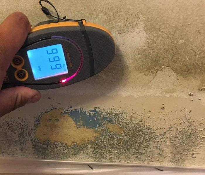 Mold Remediation Mold Growth From Water Damage