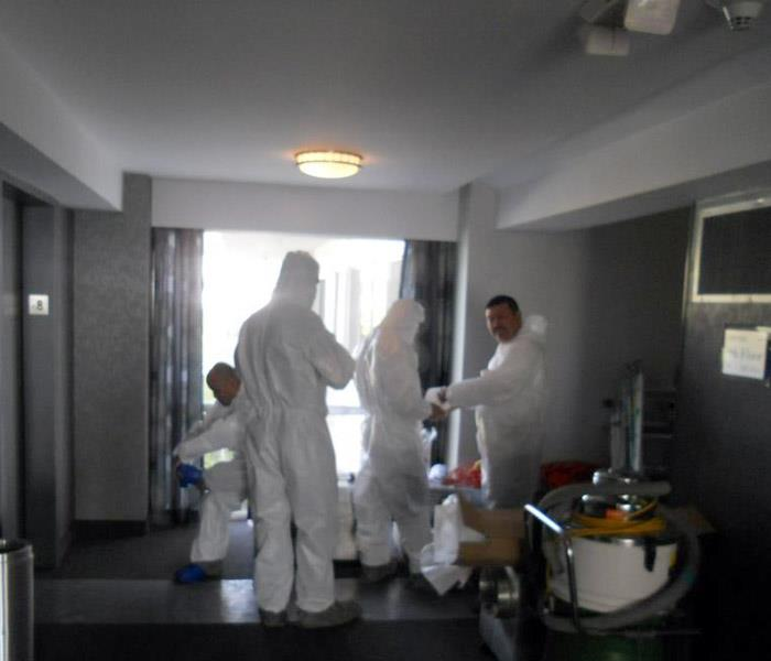 Mold Remediation Mold Removal in  West Hollywood, CA