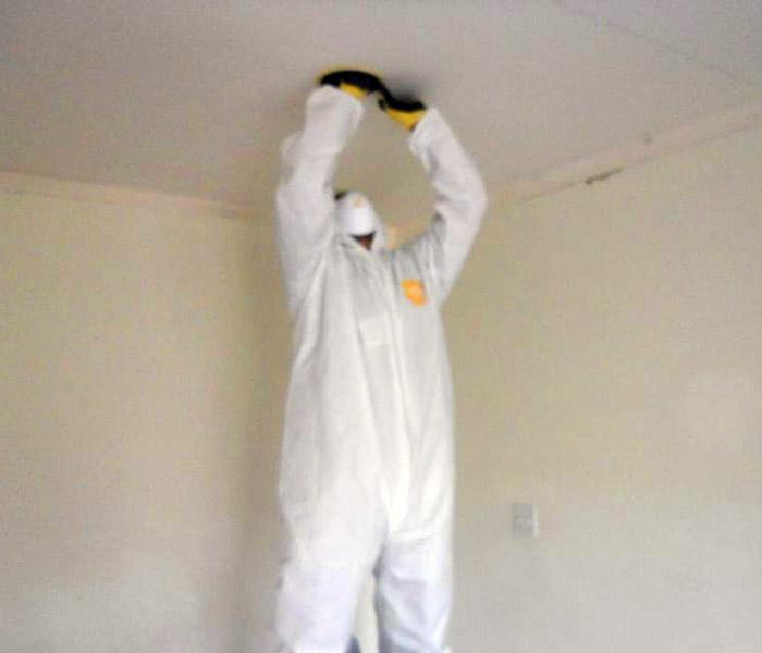 Mold Remediation Mold Remediation Fun in Pacific Palisades, CA